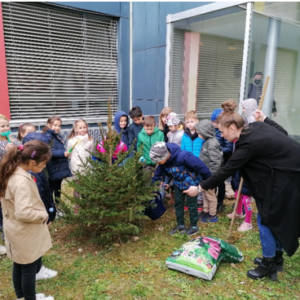 Učenici 1. C, zasadili bor u školskom dvorištu
